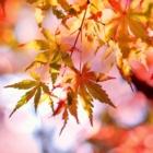 Wir machen Herbstferien