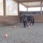 Erfogreiches Coaching mit Pferd